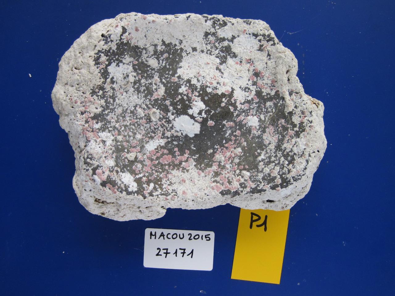 27171. Colas B. polissoir P1